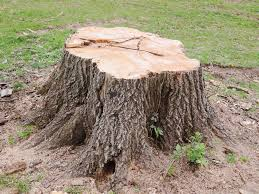 Tree Stump Removal Coggeshall Essex